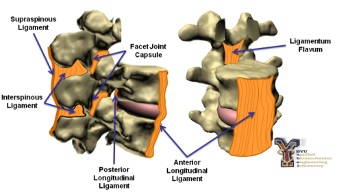 Spinal Ligament Characterization | BYU Department of Mechanical ...